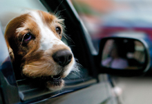 ¿Cómo se transporta una mascota?